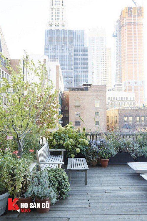 Khu vườn sân thượng với các chậu cây xanh